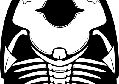 Furly - Knochen - Os Furly