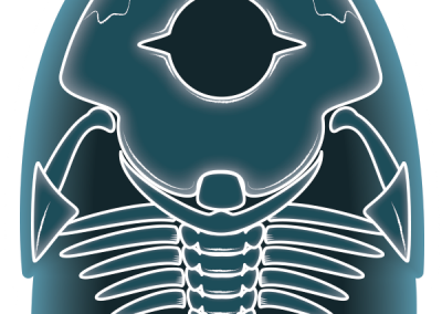 Furly - X-Ray